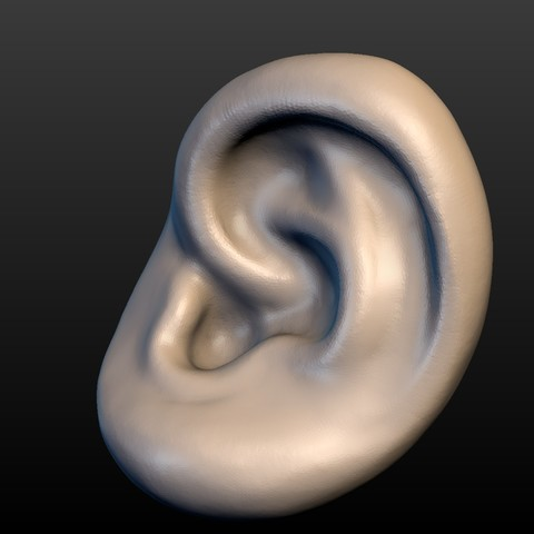 Ear-07.jpg Download 3DS file Round Ear • 3D printing template, Skazok