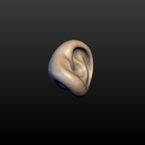 Ear-05.jpg Download 3DS file Round Ear • 3D printing template, Skazok