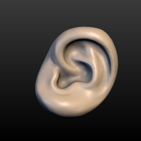 Ear-01.jpg Download 3DS file Round Ear • 3D printing template, Skazok