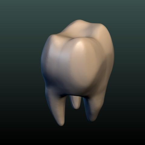 Tooth-9.jpg Download 3DS file Tooth • 3D printer design, Skazok