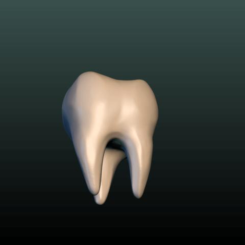 Tooth-02.png Download 3DS file Tooth • 3D printer design, Skazok