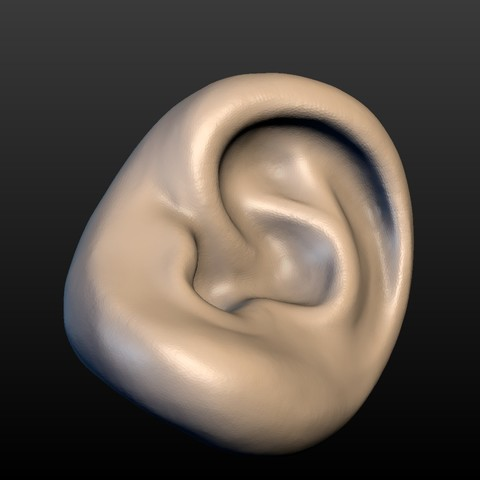 Ear-10.jpg Download 3DS file Round Ear • 3D printing template, Skazok