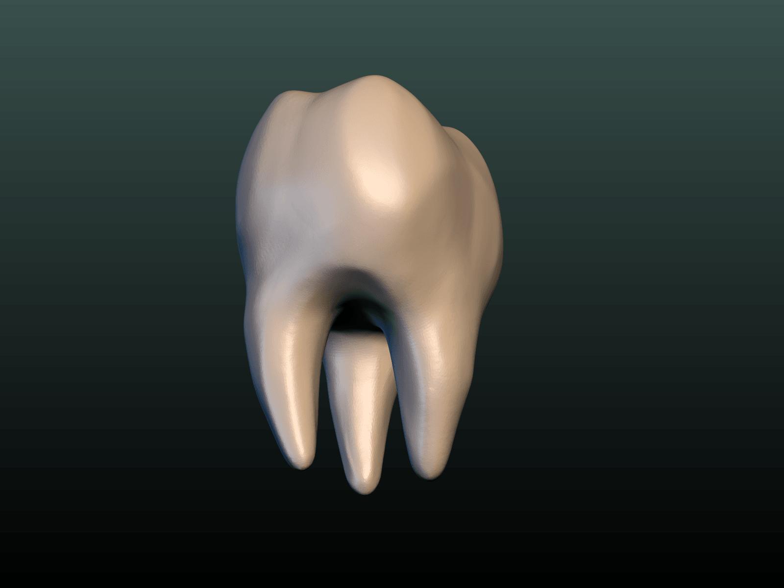 Tooth-07.png Download 3DS file Tooth • 3D printer design, Skazok