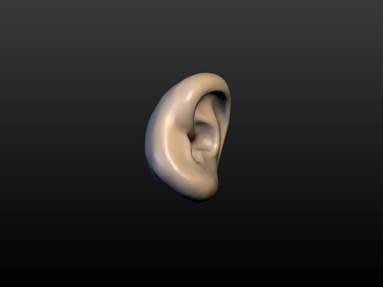 Ear-02.jpg Download 3DS file Round Ear • 3D printing template, Skazok