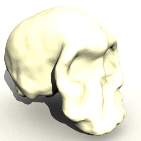 Free 3D printer model Homo Habilis Skull, sjpiper145