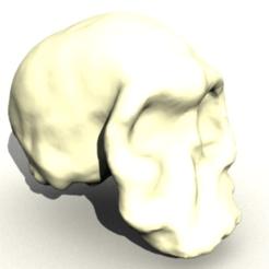 Descargar Modelos 3D para imprimir gratis Homo Habilis Cráneo, sjpiper145