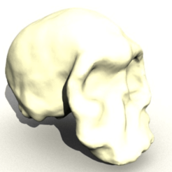 Télécharger fichier 3D gratuit Homo Habilis Skull, sjpiper145