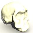 Capture d'écran 2018-05-14 à 14.31.01.png Download free STL file Homo Habilis Skull • 3D print template, sjpiper145