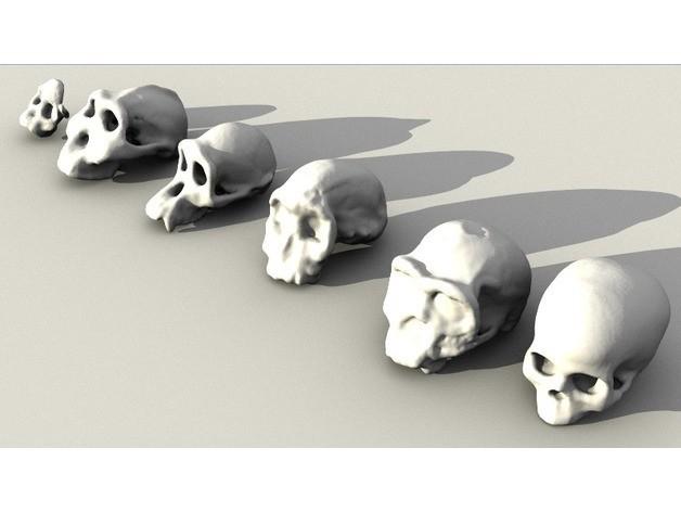 c7da2202001ef3739c67954b4c9dbb31_preview_featured.jpg Télécharger fichier STL gratuit Ensemble de crânes évolutifs • Objet pour impression 3D, sjpiper145