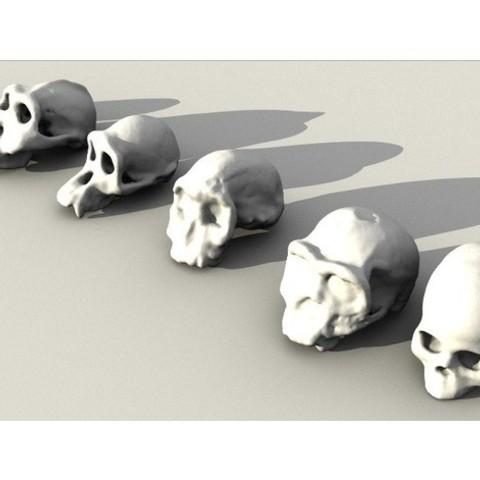 Free stl files Evolutionary Skulls Set, sjpiper145