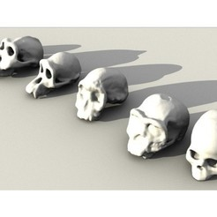 Download free STL files Evolutionary Skulls Set, sjpiper145