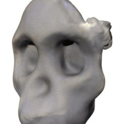 Download free 3D printer templates Australopithicus Africanus (Taung Child Skull Fragment), sjpiper145