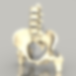 Imprimir en 3D gratis La Pelvis, sjpiper145