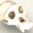 Download free STL Chimpanzee Skull, sjpiper145