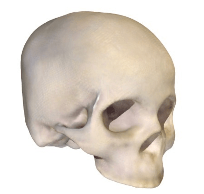 Capture d'écran 2018-05-14 à 14.33.38.png Download free STL file Homo Sapien Skull • 3D printable object, sjpiper145