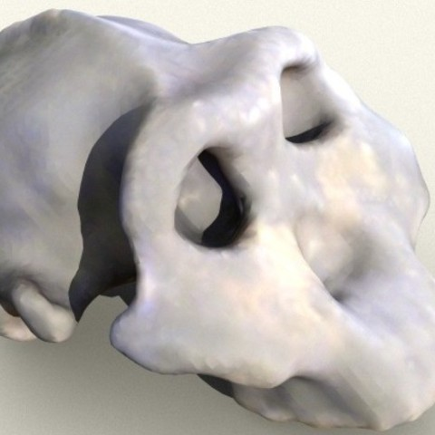 87ca0339de360cb6e414bd38f92c7845_preview_featured.jpg Download free STL file Paranthropus/Australopithicus Boisei Skull • 3D print model, sjpiper145