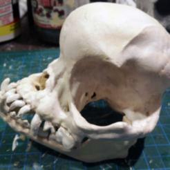 1.png Download free STL file Pug skull • 3D printing design, XTG