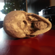 Download free STL file Human Skull • 3D print model, JamieLaing