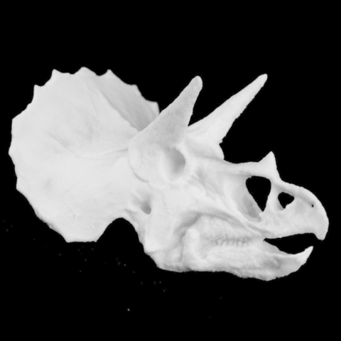 Download free STL file Triceratops Skull in Colorado, USA • 3D print template, Cool3DModel