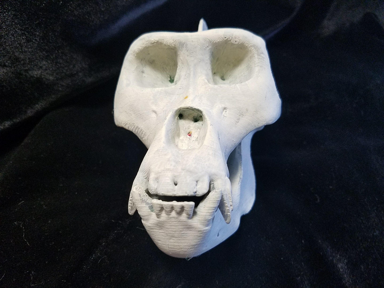 Gorilla2.jpg Download STL file HIGH RESOLUTION REPLICA SCAN GORILLA SKULL FULL SIZE • Model to 3D print, Anthrobones