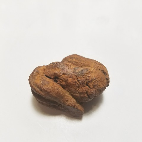 20171122_001628.jpg Download STL file 40 mya Coprolite, Turtle Fossil Feces (Poop) • 3D printable template, Anthrobones