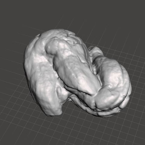 TurltePoop.JPG Download STL file 40 mya Coprolite, Turtle Fossil Feces (Poop) • 3D printable template, Anthrobones