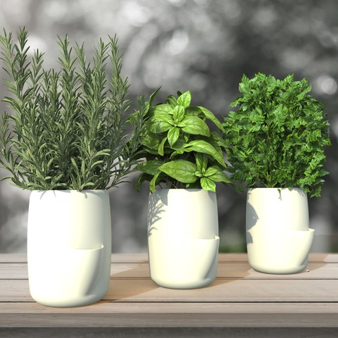 3D printer models POT TO STORE // Aromatic plant / Decoration, NerioBaus