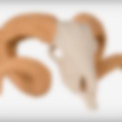 Descargar modelo 3D gratis Cráneo del carnero, JackieMake