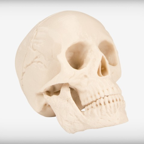 Free 3D printer files Human Skull, JackieMake