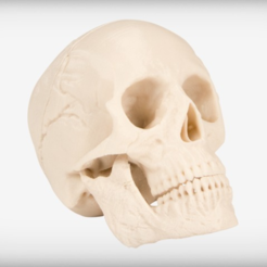 Download free STL file Human Skull • 3D print model, JackieMake