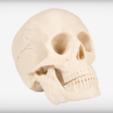 Capture d'écran 2017-09-05 à 17.50.48.png Download free STL file Human Skull • 3D print model, JackieMake
