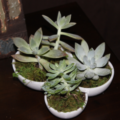 Download free STL file Succulent Tri-Bowl • Template to 3D print, jbrum360