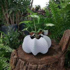 coral03.jpg Download STL file Star Coral Vase • 3D print template, DI_joseantoniosv