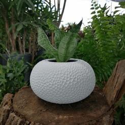coral05.jpg Download STL file Rounded Coral Vase • 3D printer model, DI_joseantoniosv