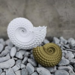 Download 3D printer files NAUTILUS SHELL PARAMETRIC - legged, DI_joseantoniosv