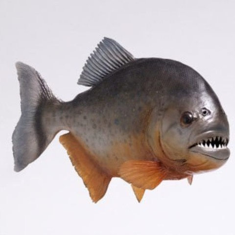 Free stl file A piranha  Fish | you all must have need this one :0, CADEN