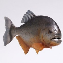 piranha.jpg Download STL file A piranha  Fish | you all must have need this one :0 • 3D print design, CADEN