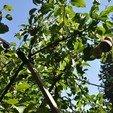 _DSC0639.JPG Download STL file Limblift - Fruit Tree Branch Support • 3D printer model, frbdesign206