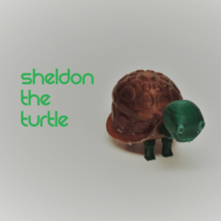 Free 3D print files Sheldon the Turtle, O3D