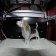 Capture d'écran 2018-01-02 à 11.51.23.png Download free OBJ file Beagle - Low Poly • 3D printable model, O3D