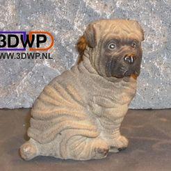 Shar-Pei.jpg Télécharger fichier STL Sculpture de chiot Shar Pei (scan 3D d'une statue de chien) • Plan pour imprimante 3D, 3DWP