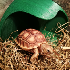 Download free STL file Tortoise Shelter (with pole), ShockyBugs