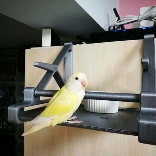 IMG_20200502_151507.jpg Télécharger fichier STL gratuit Perchoir à oiseaux (crochet sur la porte de l'armoire) • Modèle imprimable en 3D, ShockyBugs