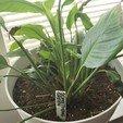 20200602_132153.jpg Télécharger fichier STL gratuit Étiquettes de noms de plantes • Plan imprimable en 3D, Jdog