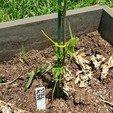 20200602_132251.jpg Télécharger fichier STL gratuit Étiquettes de noms de plantes • Plan imprimable en 3D, Jdog