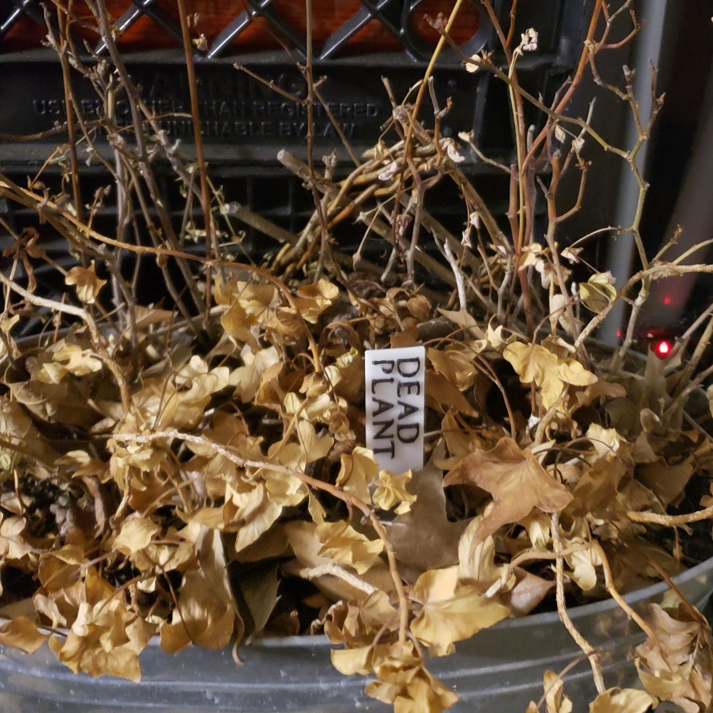20200602_132131.jpg Télécharger fichier STL gratuit Étiquettes de noms de plantes • Plan imprimable en 3D, Jdog