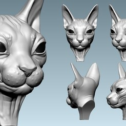 05.jpg Download OBJ file Cat sphynx  Head • 3D printable design, Dynastinae