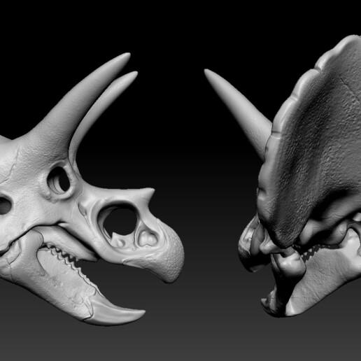 03.jpg Download free OBJ file Triceratops Skull • 3D printable model, Dynastinae