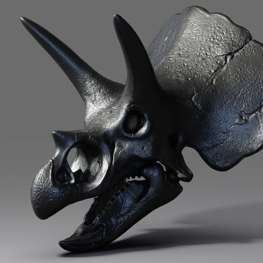 Triceratops Skull Render (1).jpg Download free OBJ file Triceratops Skull • 3D printable model, Dynastinae