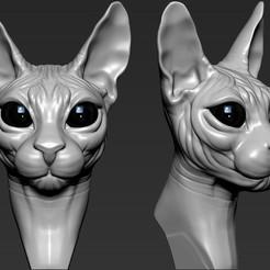 Download 3D model Cat sphynx, Garawake